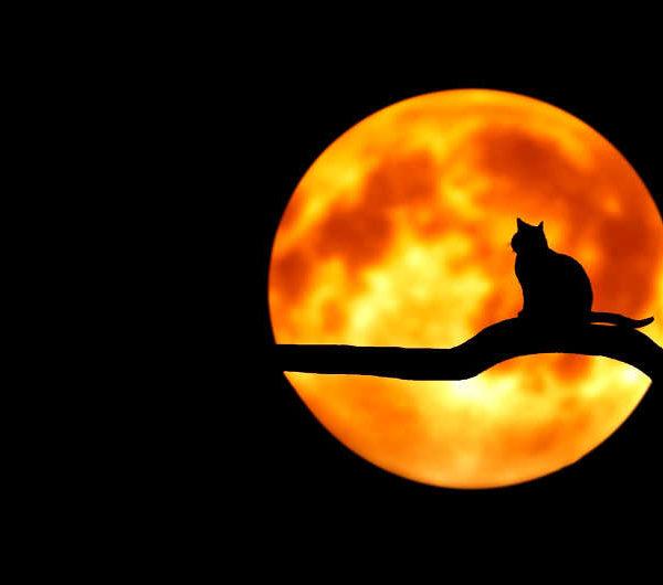 le moon milk et son pouvoir relaxant